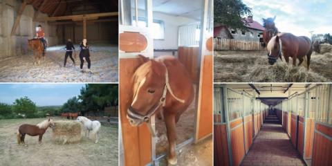 Stáje a koně (Hotel LONY)